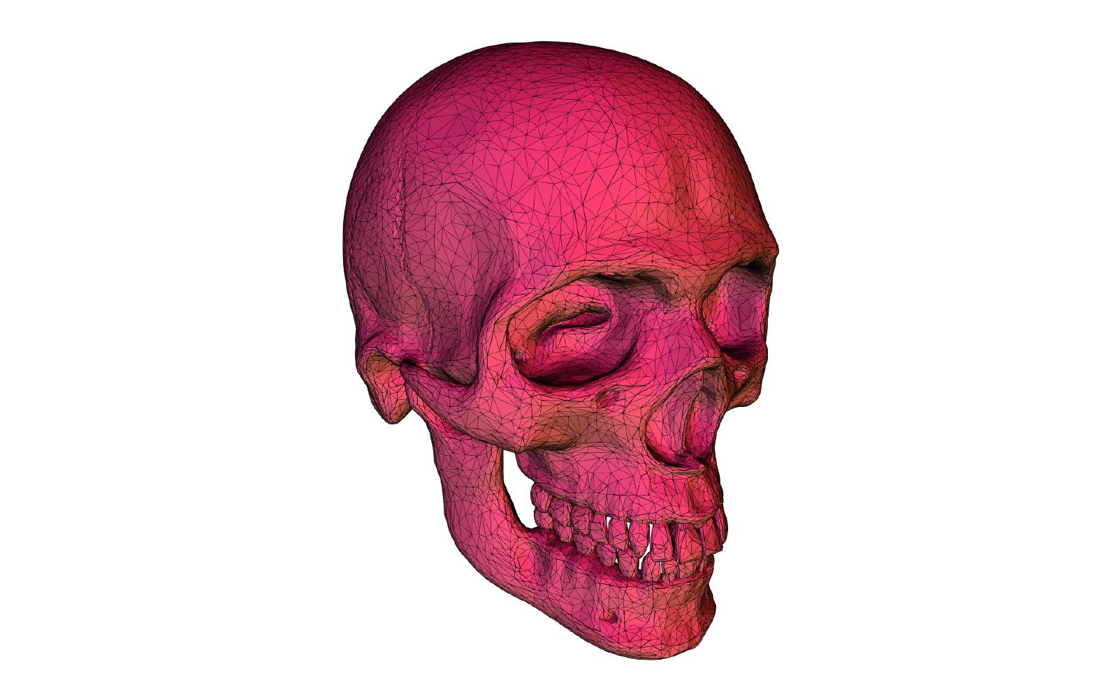 3d model of a skull